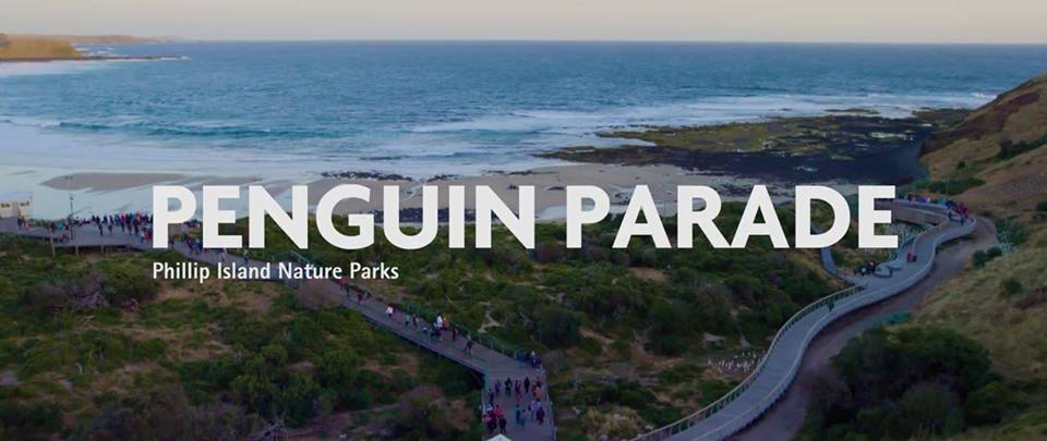 philip island nature parks penguin parade puffy billy geritage steam train sovereign hill goldfields exciting outdoor activities melbourne best australia