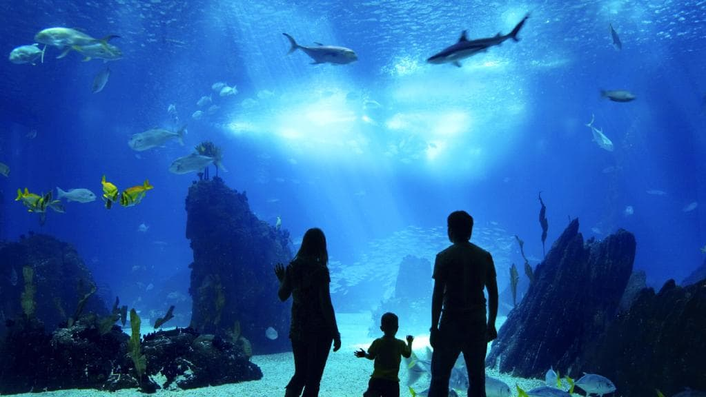 aquarium cairns tropical north queensland conservation research admission tickets