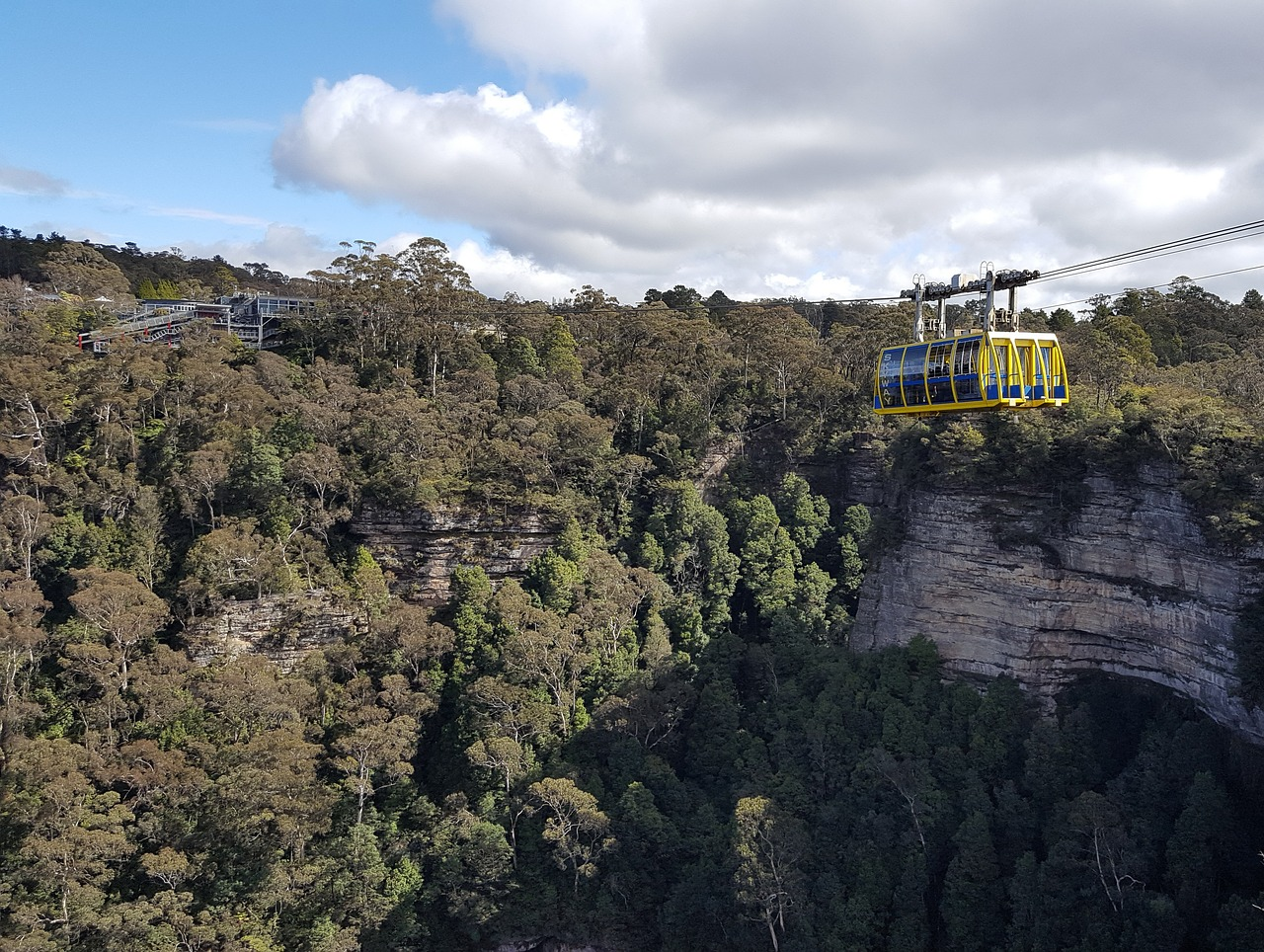 Sydney day tour harbour dinner cruise blue mountains nature wildlife